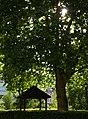Hut And Tree - panoramio.jpg