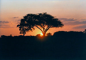 Sunset in Hwange National Park, Zimbabwe. Take...