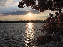 IMG 2433 - Washington DC - Tidal Basin - Cherry Blossoms.JPG