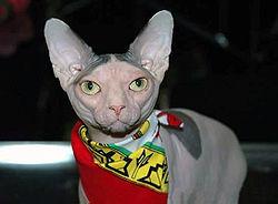Уши- кожаные крылья Глаз глубокая река Этой кошке сфинкса имя Люди дали...