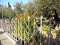 Ierusalim, Muntele Maslinilor (Gradina Ghetsimani)(13).jpg