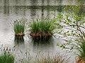 Il Lagone sotto la pioggia. Parco dei Lagoni di Mercurago. Arona (Novara).jpg