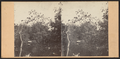 In the Ramble, from Robert N. Dennis collection of stereoscopic views.png