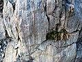 Interesting rock - descent from Lake Aloha (3090020065).jpg