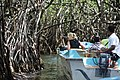 Into the mangroves (7567858430).jpg