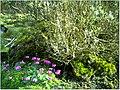 January Frost Botanic Garden Freiburg alpinum - Master Botany Photography 2014 - panoramio (2).jpg