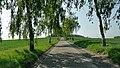 Jerxheim weg zum Heeseberg Birkenallee - panoramio.jpg