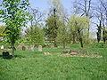Jewish cemetery in Ivanovice na Hané 15.JPG