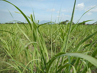 Sugar industry of the Philippines