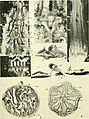 Journal of morphology (1912) (14782364934).jpg