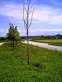 June - Master Seasons Rhine Valley Photography 2013 - panoramio (1).jpg