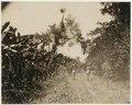 KITLV - 39072 - Muller, Julius Eduard - Paramaribo - Plantation in Surinam with bananas and cocoa - circa 1885.tif