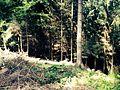 Kaiserstuhl2.jpg