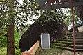 Kallil Temple DSC 1650 49.jpg