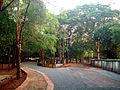 Kannur-Kota road.jpg