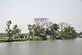 Karnamadhabpur Wetland - Kalyani Expressway - Panihati - Kolkata 2017-03-30 0898.JPG