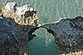 Karstified aragonitic limestone (Pain Pond, San Salvador Island, Bahamas) 3 (16322172252).jpg