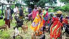 women in colourful dresses tending goats
