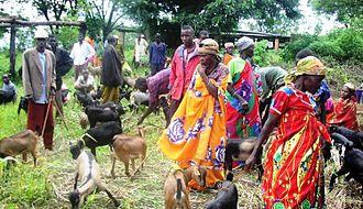 Burundi - A group of Burundian women rearing goats.
