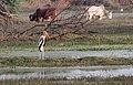 Keoladeo-Vogelschutzpark-34-Storch-2018-gje.jpg