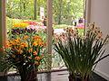 Keukenhof Garden (12).JPG