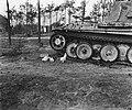 Kippen bij een tank, Bestanddeelnr 900-0426.jpg