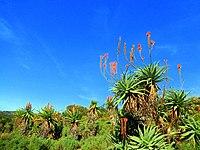Kirstenbosch National Botanical Garden by ArmAg (28).jpg