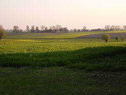 Kolonia Oporów - Krajobraz pól.JPG
