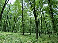 Kosmaj forest 2.jpg