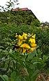 Kumbang dan bunga.jpg