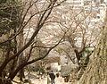 Kyoto - panoramio - HALUK COMERTEL (7).jpg