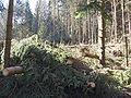 Kyrill-Schäden-05.JPG