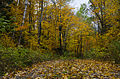 L'automne au Québec (8072361720).jpg
