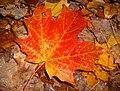 L`automne - panoramio - Mario Hains.jpg