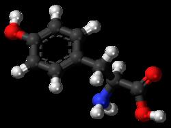 L-Tyrosine-3D-balls.png
