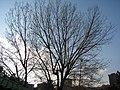 LIGHTS - panoramio - Behrooz Rezvani (2).jpg