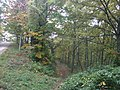 La strada che attraverso i boschi conduce al fosso delle Strosce - panoramio.jpg