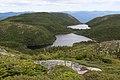Lacs Moucherolle Pic maculé.jpg