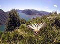 Lago di Lugano Segelfalter auf dem Monte Bre.jpg