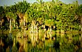 Lagoa das araras.jpg