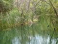 Lake at Kambalakonda Eco Tourism Park.jpg