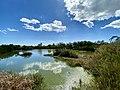 Lake with birds.jpg