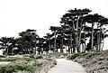 Lands End Trail, San Francisco (35426543562).jpg
