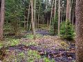 Landschaftsschutzgebiet Hermannstal Nr. 41, 4 WDPA ID 321564 Sublocation DE-TH.jpg
