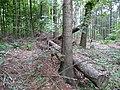 Landschaftsschutzgebiet Horstmanns Holz Melle -Im Wald- Datei 5.jpg