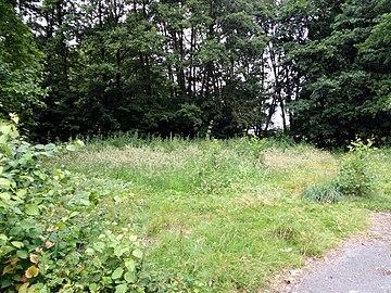 Landschaftsschutzgebiet Warmenau-Ufer LSG OS 00019 Datei 25.jpg