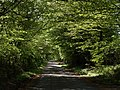 Lane to Higher Haye - geograph.org.uk - 429052.jpg
