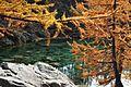 Larici al lago delle Streghe.JPG