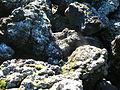 Lava rocks (356547792).jpg
