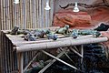 Le Bugue - Aquarium du Périgord noir - Iguane terrestre des Galapagos - 001.jpg